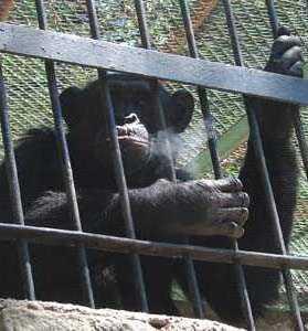 El mono mario capitulo 24 choteando en la web - 3 6